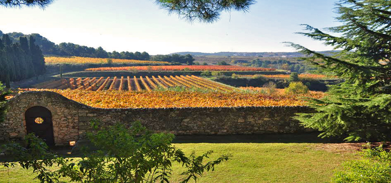 cava-vineyard